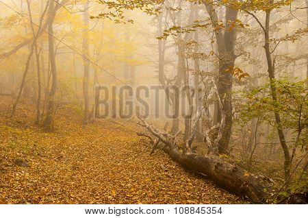 Mistical place in autumnal forest