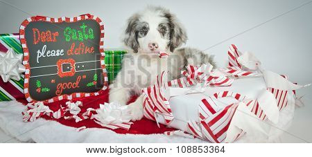 Bad Christmas Puppy!