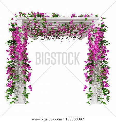 Flowers bougainvillea, front view