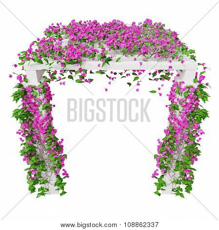 Pink climbing flowers bougainvillea. 3D graphic isolated object on white background poster