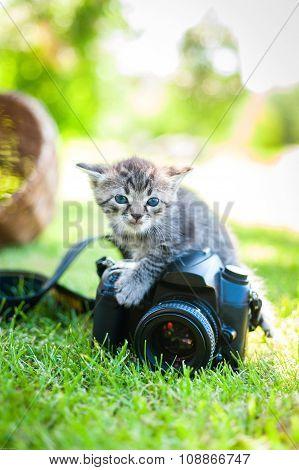 little kitten, outdoor