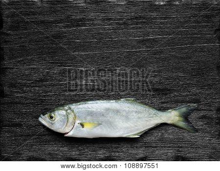 Raw Fish (bluefish)