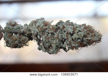 Medical Marijuana Bud Deadhead OG