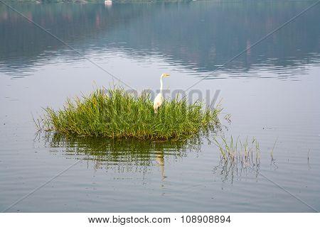 Stork At Grass At The Man Sagar Lake. Jaipur, Rajasthan, India.