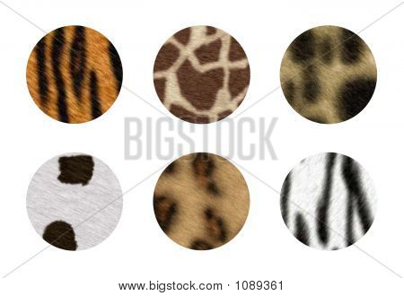 six african wild animal skins in circle button poster