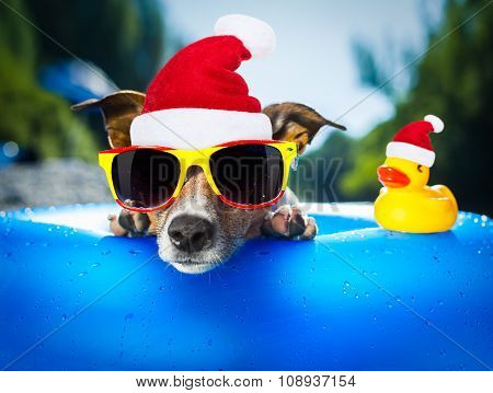 Beach Dog At Christmas