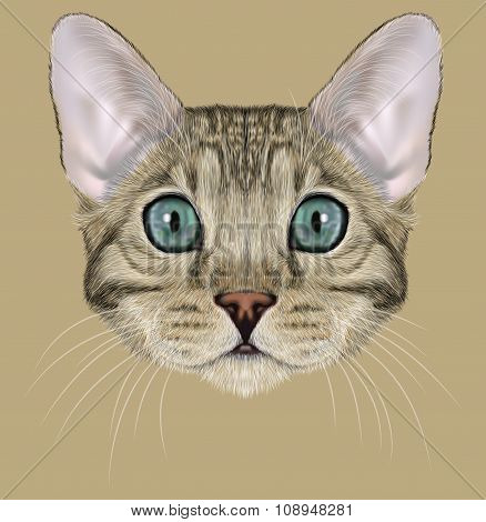 Illustrated Portrait of grey Bengal Cat with blue eyes