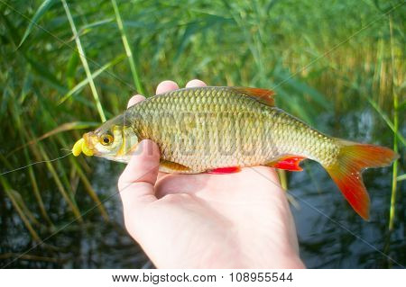 Rudd Summer Lake Fishing