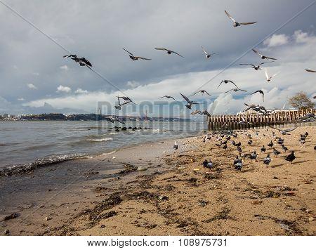 Birds on beach of Tagus river