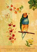Vintage styled artistic wall calendar for the year 2016 with watercolor drawings of birds and flowers; A4 to A3 size; January (month name in various languages) poster