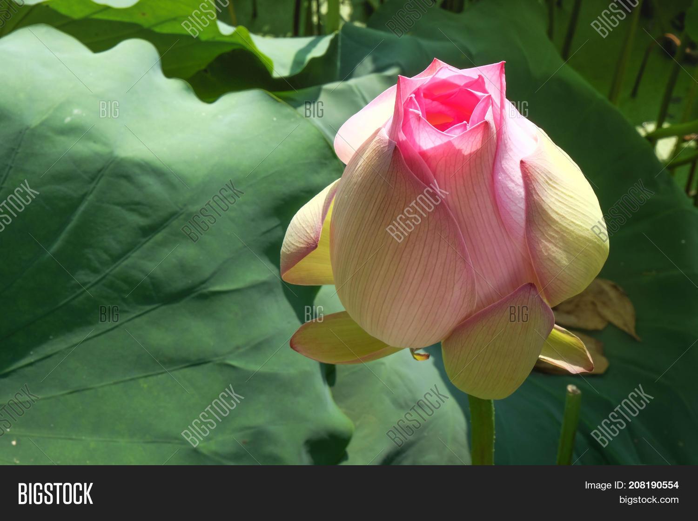 This Beautiful Pink Image & Photo (Free Trial) | Bigstock