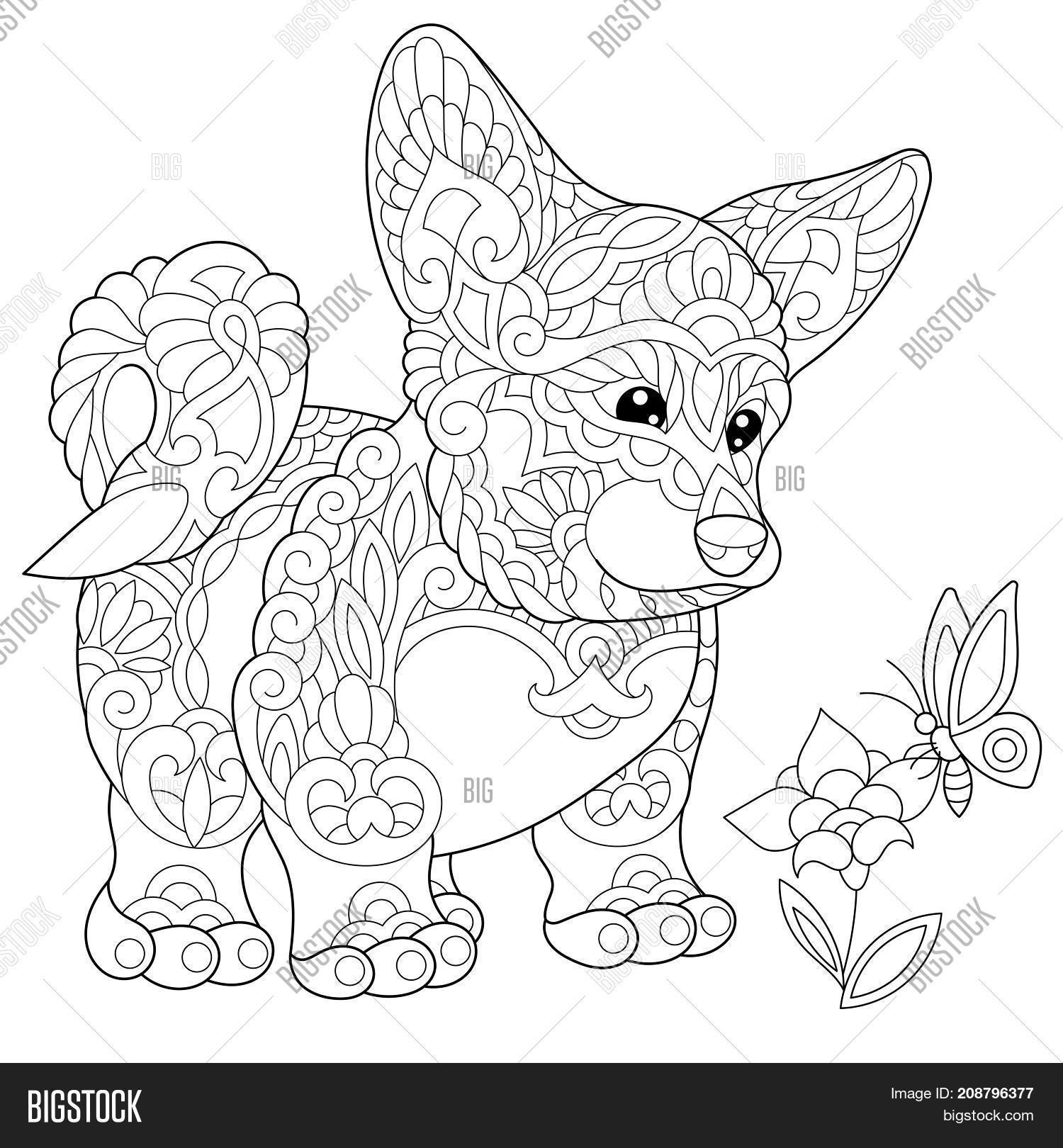 corgi coloring pages - coloring page welsh corgi dog image photo bigstock