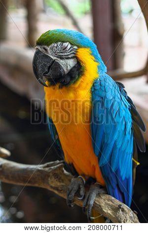 Macaw take a nap on a tree