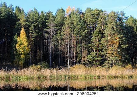 Autumn nature. Autumn forest. Russian forest. Nature Reserve. The autumn woods. Golden autumn. Lake in autumn forest. Autumn forest reflected in the lake in september. Autumn landscape. Russian forest in autumn.  The lake in Russia