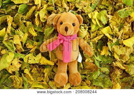 Teddy bear in autumn over the leafs in the garden.
