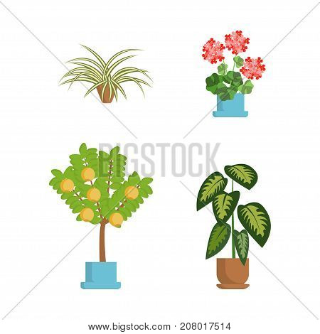 Window gardening infographic elements. Vector set of flat illustration of horticultural sundry  isolated on white. House growing potted houseplants set for greenhouse design and flowers in pots EPS 10