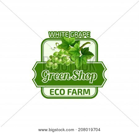 Grape icon for green fruit shop or eco farm store design template. Vector isolated symbol of white grape vintage bunch wine for vine or fruit product and juice drink or jam label