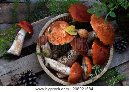 Set Of Red Cap Boletus In Bowl On Wooden Background. Brown Wild Mushrooms. Edible Fungus Leccinum Au