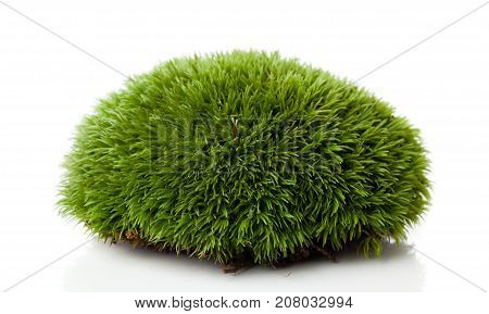 fresh green moss on a white background