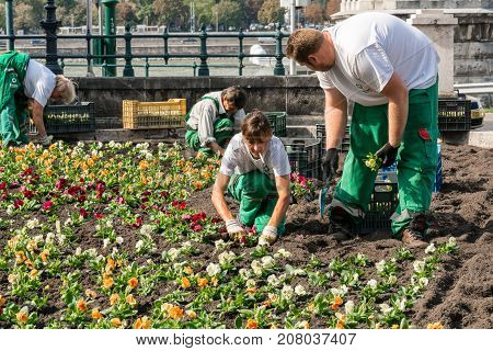 Budapest Hungary - September 27 2017: Close up front view of two female and two male caucasian garden workers who plants colorful flowers in a flowerbed in Budapest Hungary to embellish a public area in the city next to the Danube river.