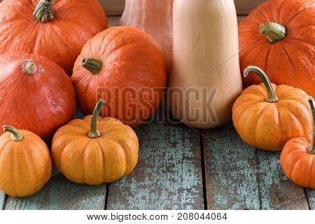 Helloween Harvest Festival Thanksgiving. Bright orange pumpkins and butternut squashes on robin egg blue background closeup