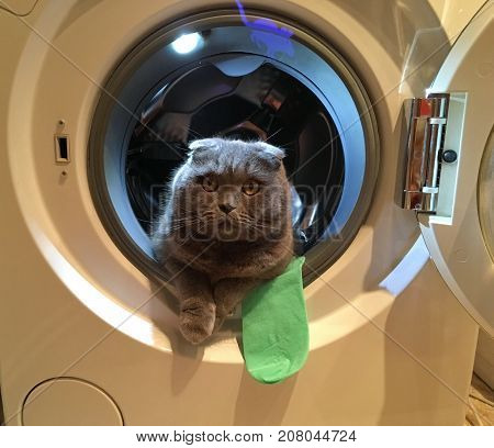 Gray Scottish fold cat sitting in the washing machine while the door is open, green sock sticking out of the washing machine, there is a light blue projection of the mouse