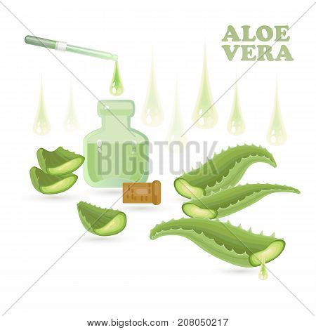 Pieces of aloe vera with vial isolated on white background. Aloe Vera leaves and slices with pipette and drops. Vector illustration.