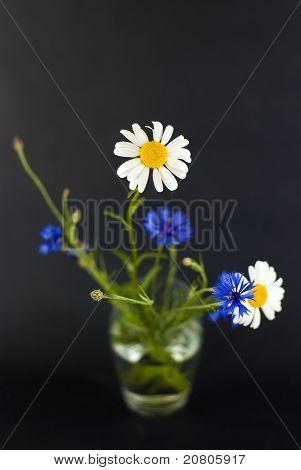 Wildblumen auf schwarzem Hintergrund