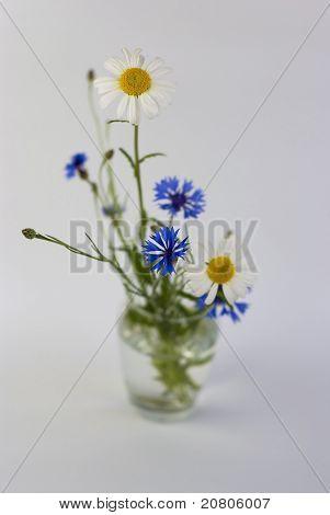 Wilde Blumen auf weißem Hintergrund