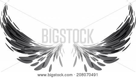 Wing span, black and white, vector illustration