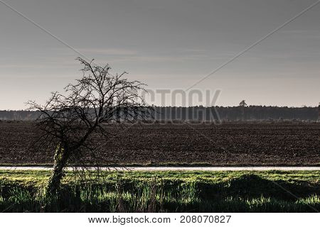 Scary scene of dried old tree by a field of plough land and fores in distance on a grey cold autumn evening and sunset light