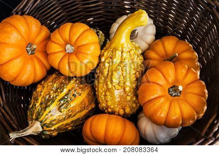 A Closeup of Plenty Pumpkins collected in the Wicker Basket for Halloween and Thanksgiving in the Autumn Season Holiday Concept Top View