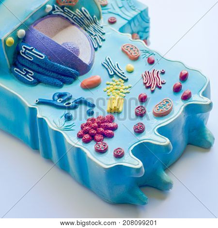 Model of animal cell in the laboratory