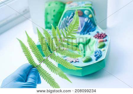 Plant leaf and background blur of model plant cell