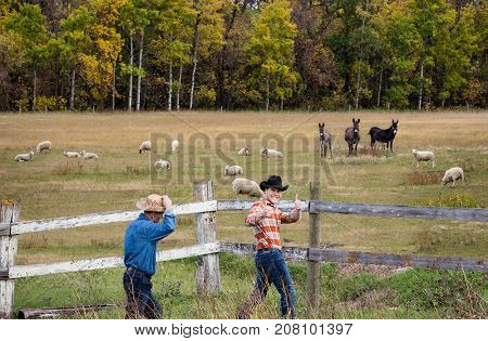 horizontal image of two cowboys walking along the fence with one guy acting silly and giving the thumbs up. with sheep and donkeys  grazing in the pasture in the fall.