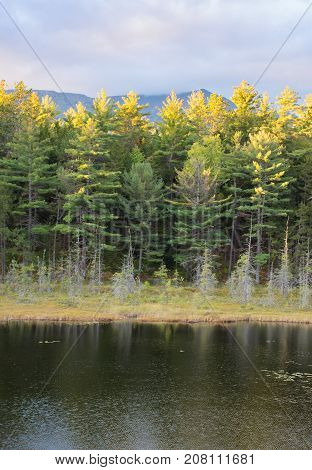 A pond in Baxter State Park in Maine with sunlit evergreen trees in the background and overcast skies above. Photographed at sunset.