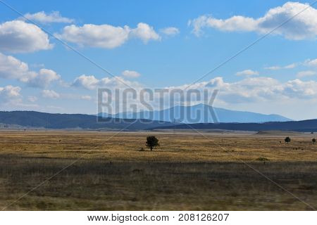 Natural landscape whit tree in the middle of the field