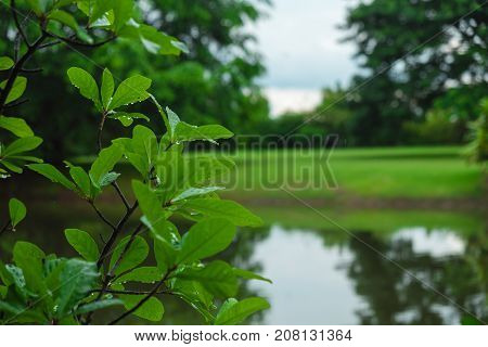 Closeup. Water Droplet On Green Leaf Of Tree In Forest With Grass Field, Tree And River Are Backgrou