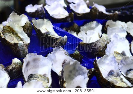 Jumbo Pacific Oysters in trays at fish market in Sydney New South Wales Australia