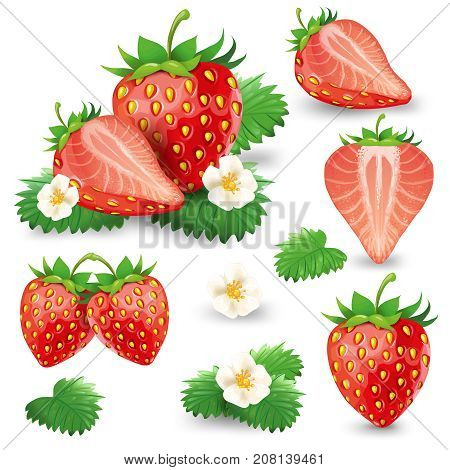 Set of whole and cut in half ripe strawberry with leaves and blossom realistic vector illustration isolated on white background. Delicious juicy sweet red berries with blooming flower design element