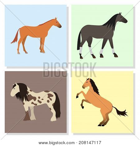 Set of horse pony stallion isolated different breeds color farm equestrian animal characters vector illustration. Collection mammal silhouette domestic animal cartoon pet design.