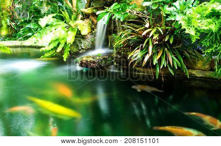 Green garden with koi fish ,the exterior home style with soft light morning.