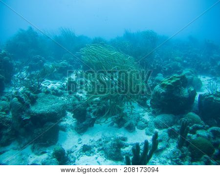 coral life caribbean sea underwater life picture
