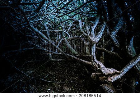 Roots and branches of trees in deep forest. Dark textured background.