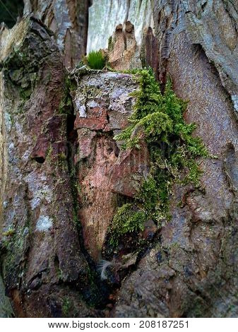 Moss Growing on a Gnarled Tree Trunk