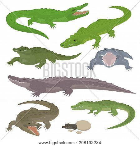 Green crocodile and alligator reptile wild animals vector illustration collection cartoon style. Cartoon green crocodile reptile cartoon vector illustration