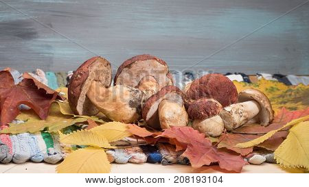 White porcini Mushrooms Cep Boletus over autumn leaves and hand-made cotton mat. Wooden gray Background. Autumn Cep white porcini mushrooms. Yellow and red autumn leaves.