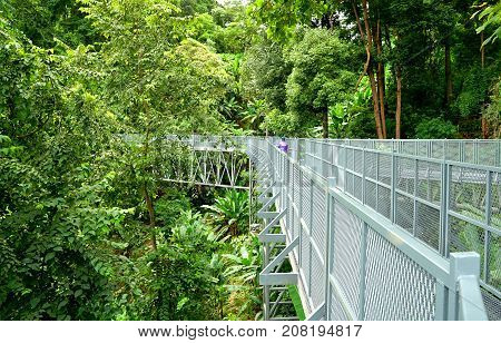 Tree Canopy Walkway The Iron Bridge in the tropical forest at Queen Sirikit Botanic Garden Chiang Mai Thailand