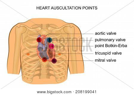 vector illustration of heart auscultation points. cardiology