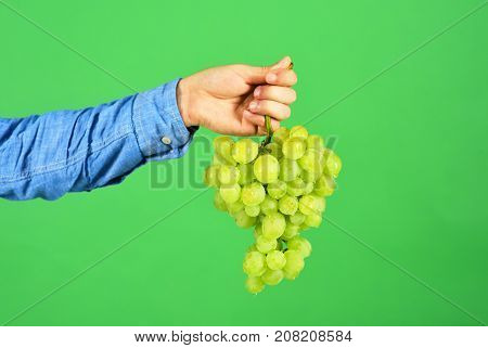 Male Hand Holds Bunch Of Green Grapes Isolated On Green